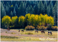 Image of Horses Grazing Kebler Pass, CO