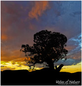 Image of Tree Silhouette at Sunset